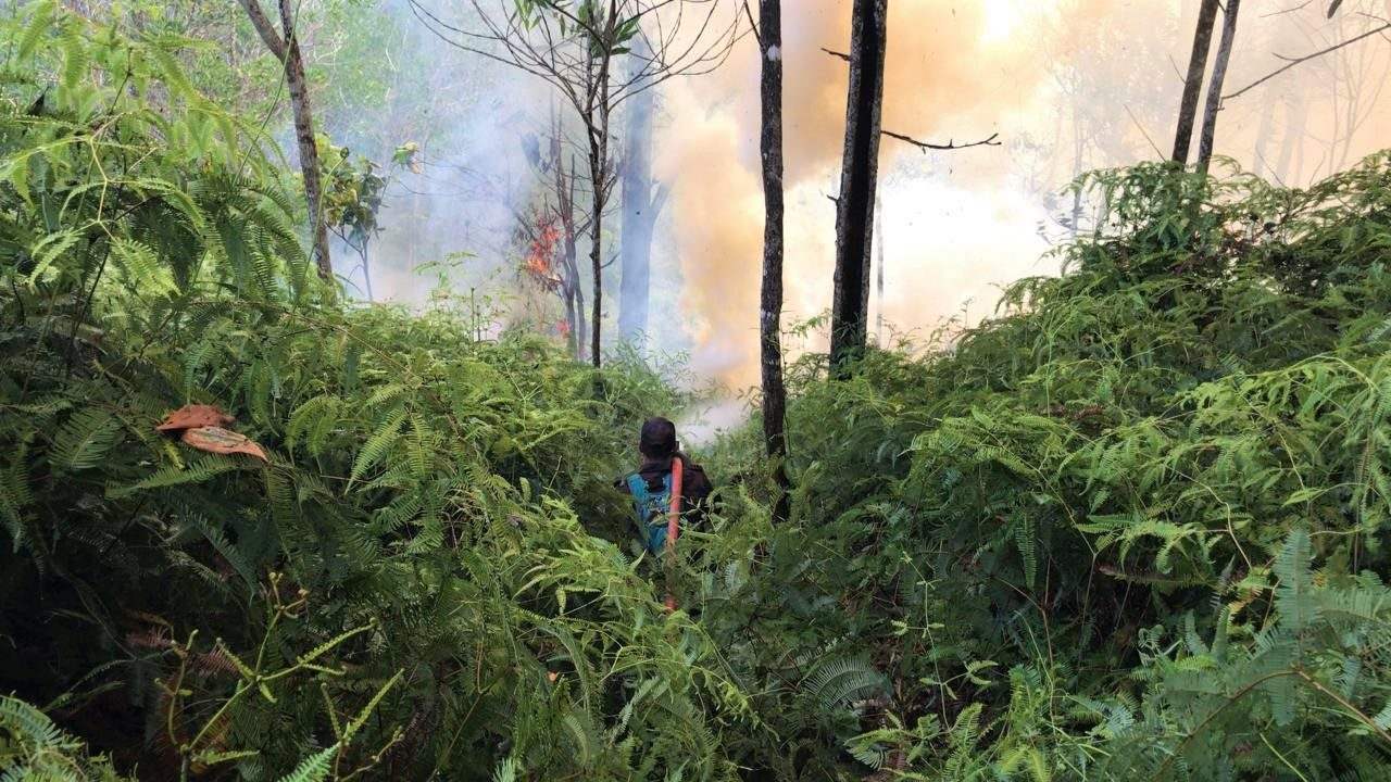 Bomba: 161 hectares of forest destroyed by fire in past week