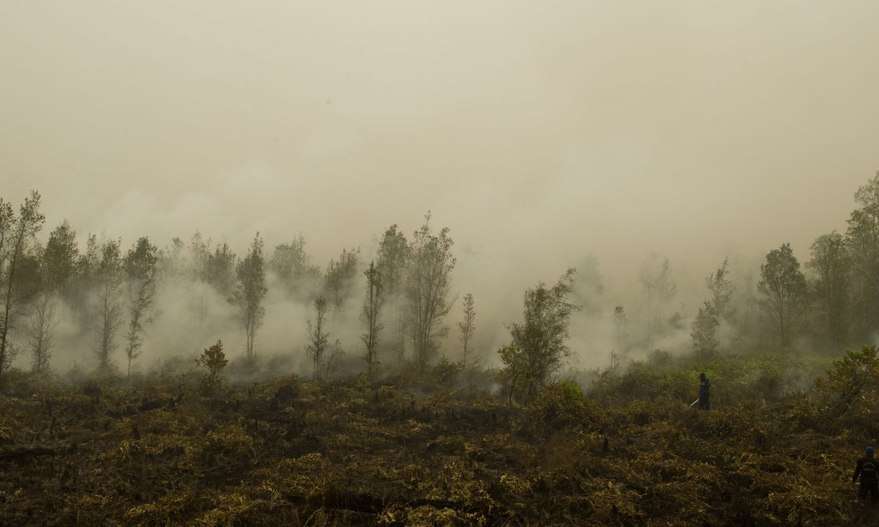 To blunt impact of forest fires, Brunei to introduce new law to
